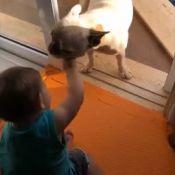 Andressa Suita filma filho brincando com cachorro:'Paixão do Gabriel é o Pirata'