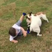 Momento fofura! Filho de Gusttavo Lima, Gabriel tropeça ao brincar com cachorros