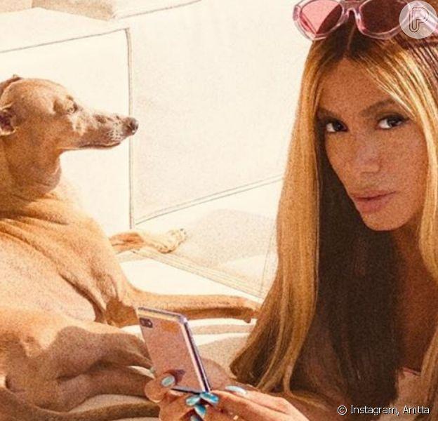 Anitta faz foto com pet e chama atenção de Gui Araujo