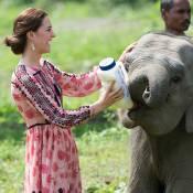Kate Middleton dá mamadeira a filhotes de elefante e rinoceronte na Índia