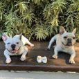 Sthefany Brito pediu que os seguidores parassem de mandar histórias de pessoas que doaram seus cachorros por causa do nascimento dos filhos