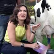 Fátima Bernardes tira leite de vaca na TV ao voltar das férias: 'Não foi ruim'