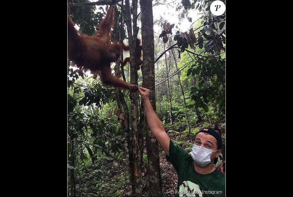 Leonardo DiCaprio posa em floresta e fã brinca: 'Cuidado com o urso'