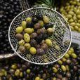 'A alimentação do FMD baseia-se na plant based (legumes, frutas e verduras) aliada a fontes de gorduras boas', disse Patricia Davidson.