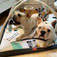 Grávida, Sthefany Brito inclui pets em na nova fase