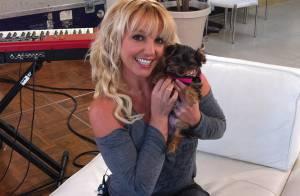Britney Spears abre Twitter para sua nova cadelinha, já com 10 mil seguidores