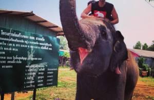 Bruno De Luca publica foto em cima de elefante em gravação do 'Vai Pra Onde'