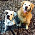 Os cachorros são tratados como filhos pelos dois
