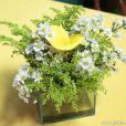 Copos de leite amarelos foram usados nos arranjos de mesa do casamento Ester (Grazi Massafera) e Cassiano (Henri Castelli) em 'Flor do Caribe'