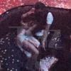 Traição? Selena Gomez e namorado de Katy Perry, Orlando Bloom, são vistos juntos