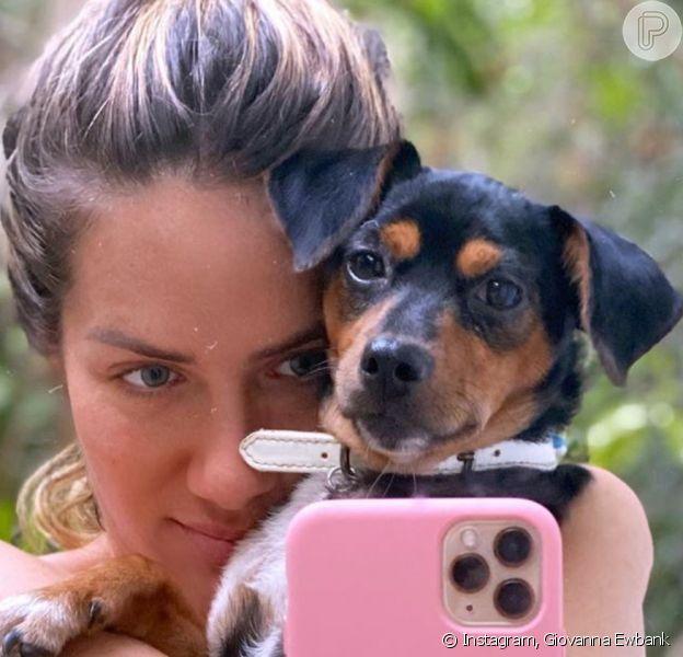 Giovanna Ewbank mostra barriga em foto de biquíni com pet postada nesta quarta-feira, dia 26 de fevereiro de 2020