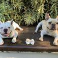 Sthefany Brito anunciou gravidez com ajuda dos pets London e  Montalcino