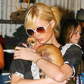 Paris Hilton lamenta morte de cadela que era sua marca registrada: 'Arrasada'