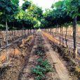 Isis Valverde postou uma foto da vinícola da região do Vale de São Francisco, que será usada como locação de 'Amores Roubados'