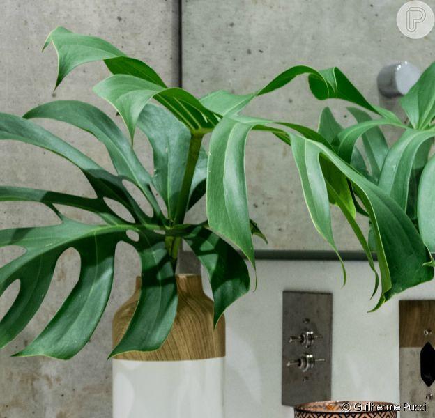Investir na decoração com plantas é um jeito fácil de renovar o visual da casa