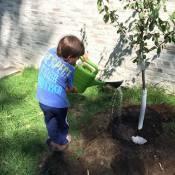 Gisele Bündchen mostra filho plantando árvore: 'Mamãe orgulhosa'
