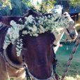 O cavalo que levou Bia Antony à capela de Caraíva ganhou arranjo de flores na cabeça