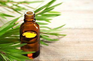 Óleo de melaleuca controla a oleosidade da pele e combate a acne. Veja como!