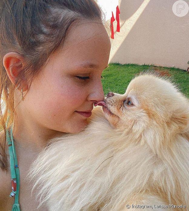Larissa Manoela posa com seus nove cachorros em dia de sol: 'Tarde dedicadas a ele e a uma vitamina D'