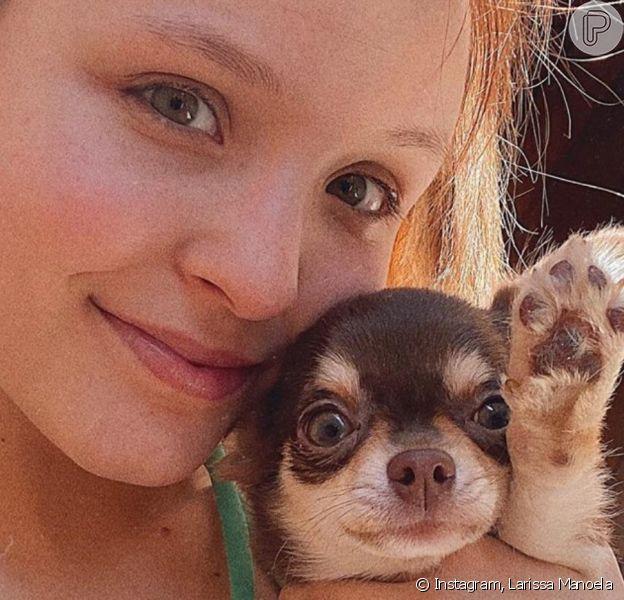 Cabelo de Larissa Manoela gera dúvida na atriz em fotos com pets. Entenda motivo em matéria nesta segunda-feira, dia 23 de março de 2020