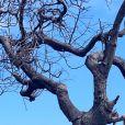Bruna Marquezine mostra fotos de momento divertido em árvore durante viagem