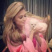 Paris Hilton compra cãozinho de estimação por R$ 30 mil: 'Meu precioso bebê'