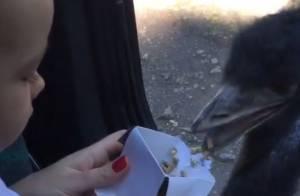 Ana Hickmann mostra o filho, Alexandre Jr., dando comida para emú no zoo. Vídeo!