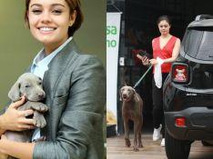 Sophie Charlotte passeia com cachorro que ganhou de Daniel de Oliveira. Fotos!
