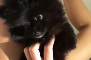 Ex-BBB Emilly ganha cachorro de fãs e se emociona: 'Não tenho palavras'. Vídeo!