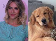 Giovanna Ewbank pede ajuda para encontrar cachorro perdido: 'Desesperados'