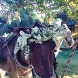O cavalo que levou a noiva, Bia Antony, à capela de Caraíva ganhou arranjo de flores brancas na cabeça