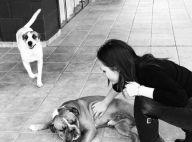 Larissa Manoela lamenta morte de um de seus cachorros: 'Foi grande companheiro'