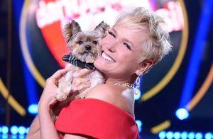 be7201fb8a907 Xuxa Meneghel sinaliza erro médico em morte do cachorro Dudu   Dói mais