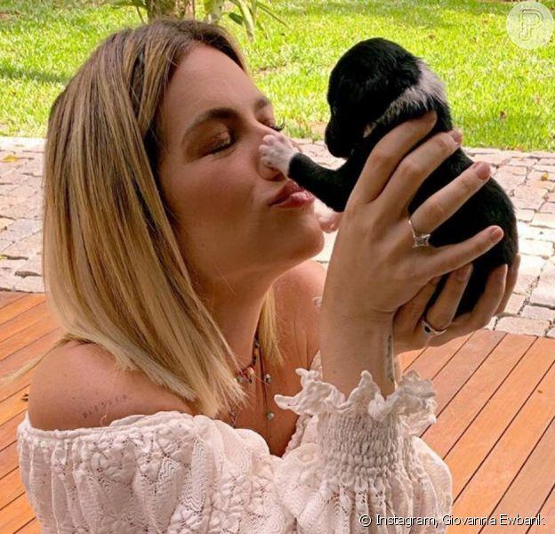 Giovanna Ewbank exibe transformação de cachorro e impressiona