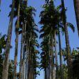 O Jardim Botânico do Rio foi criado na época que o país ainda era um Império
